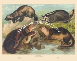Wolverine, Badger, Sea Otter, Otter